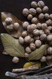 核桃、叶子和枝杈在黑暗的背景 库存照片