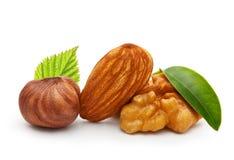 核桃、杏仁坚果和榛子 免版税库存图片