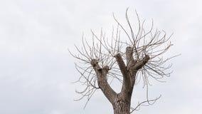 核桃树上面分支 库存图片