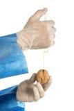 核桃GMO 核桃和注射器 库存图片