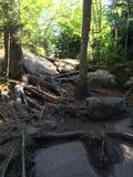 根和岩石 库存照片