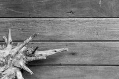 根和纹理或者木头背景 库存照片