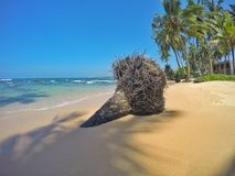 根在一个华美的海滩放置 免版税库存照片
