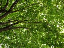 根据大树成长概念 库存照片