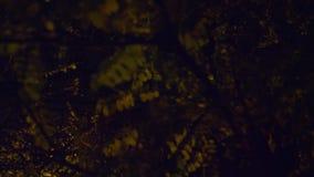 根据街灯的桦树分支 股票视频
