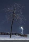 根据街道灯笼的冬天树 免版税库存照片