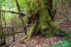 根源热带的结构树 免版税库存图片