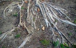根源结构树 免版税库存图片