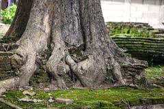 根源结构树 免版税库存照片