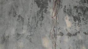 根的运动用在混凝土墙背景的风力量 股票视频
