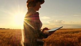 格子花呢上衣的女孩农夫在日落背景的麦田 女孩使用一种片剂,计划收获 股票视频