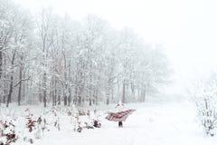 格子花呢披肩的一个女孩在一只笼子在冬天 库存图片