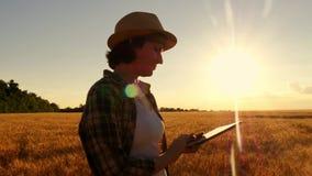 格子衬衫的少女农夫在日落背景的麦田 女孩使用一种片剂,计划收获通报 股票录像