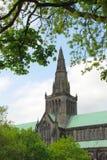 格拉斯哥大教堂通过树 库存照片