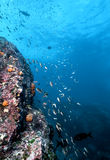 格斯达里加水下的墙壁 免版税库存图片