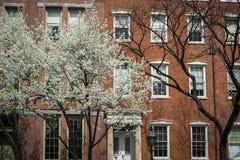 格林尼治村公寓,开花的樱桃树,纽约Cit 免版税库存图片