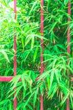 格栅篱芭和竹子叶子背景 免版税图库摄影