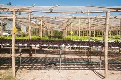 水栽法农场自Corofield的,泰国温室 图库摄影