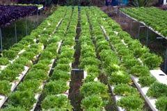 水栽法农场自Corofield的,泰国温室 免版税库存图片