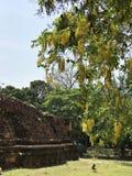 桂皮瘘或栾树树或Canafistula或者黄金雨树或者Ratchaphruek开花 库存照片