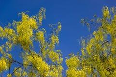 桂皮瘘 免版税库存照片