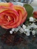 桃子和黄色玫瑰与baby& x27; s呼吸 免版税库存照片