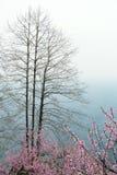 桃子开花在moutainous区域 免版税库存照片