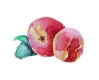 桃子手拉的水彩,在白色背景 光栅例证 库存照片