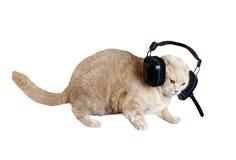 桃子猫耳机 库存图片