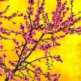 桃子花在庭院里 免版税库存照片