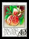 桃子,果子serie,大约1986年 免版税库存图片