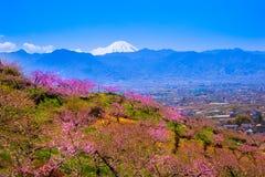 桃树和富士山 免版税库存图片