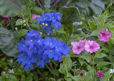 桃红色、明亮的蓝色和红色花在一张床上在达拉斯树木园 库存图片