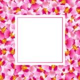 桃红色万代兰属小姐Joaquim Orchid Banner Card 新加坡国民花 也corel凹道例证向量 库存例证
