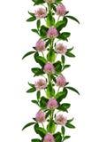 桃红色三叶草开花线无缝的样式 免版税库存图片