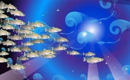 桃红色三文鱼鱼学校  海洋生物 传染媒介例证优选从用于背景设计,装饰 库存图片
