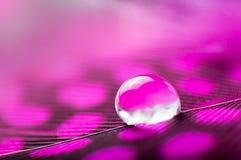 桃红色与一宏观水露滴,美好的自然本底的颜色蓬松羽毛的一个抽象图象 免版税库存照片
