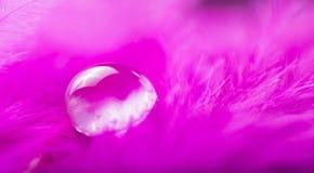 桃红色与一宏观水露滴,美好的自然本底的颜色蓬松羽毛的一个抽象图象 免版税库存图片