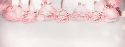 桃红色与bokeh照明设备和退色的颜色的玫瑰全景边界 库存照片
