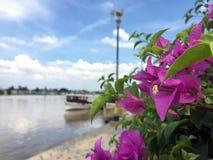 桃红色九重葛花和绿色叶子在河和蓝天旁边 免版税库存照片