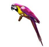 桃红色五颜六色的鹦鹉 库存图片
