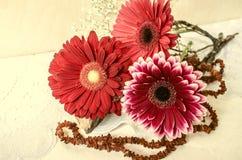 桃红色伯根地和红色大丁草与琥珀色的小珠在鞋带布料 库存照片