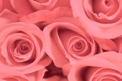 桃红色俏丽 图库摄影