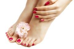 桃红色修指甲和修脚与花特写镜头,在白色背景 库存图片