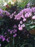 桃红色兰花在庭院里 免版税库存照片