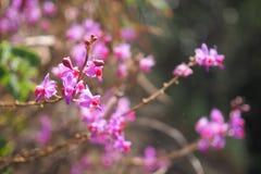 桃红色兰花在雨林里 库存照片