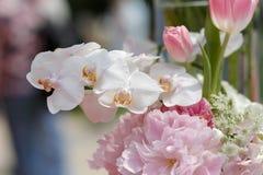 桃红色兰花植物、牡丹和郁金香 库存照片