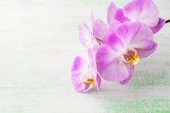 桃红色兰花植物兰花分支 图库摄影