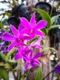 桃红色兰花花开花在庭院开花 免版税库存照片