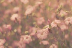 桃红色减速火箭的花背景 免版税库存照片